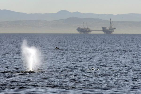 США отказываются от зависимости импорта нефтепродуктов. Фото: David McNew/Getty Images