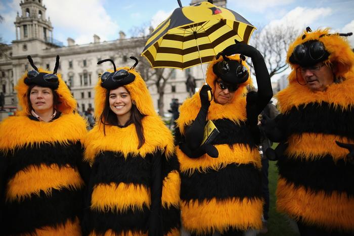 ЕС запретил использование пестицидов. Участники акции протеста в защиту пчёл в Лондоне. Фото:  Dan Kitwood/Getty Images