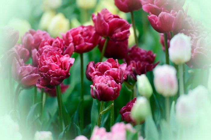 С праздником весны, дорогие женщины! Фото: Getty Images