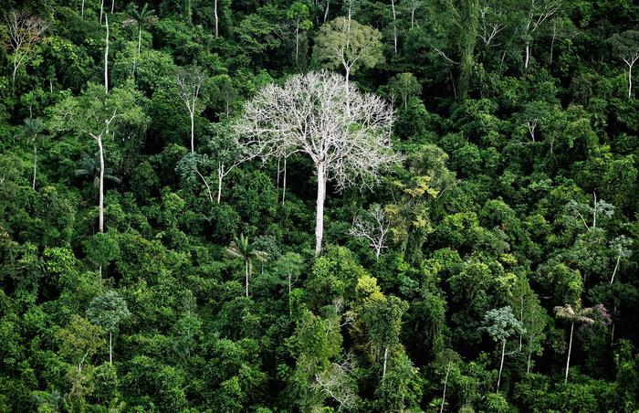 Резко сократилась вырубка тропических лесов. Фото: Mario Tama/Getty Images