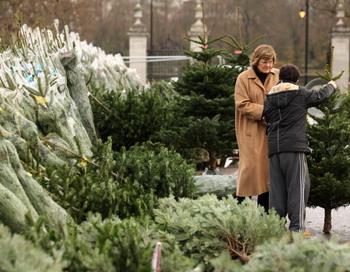 Самым удобным вариантом для приобретения елки - это специально оборудованные новогодние базары. Oli Scarff/Getty Images