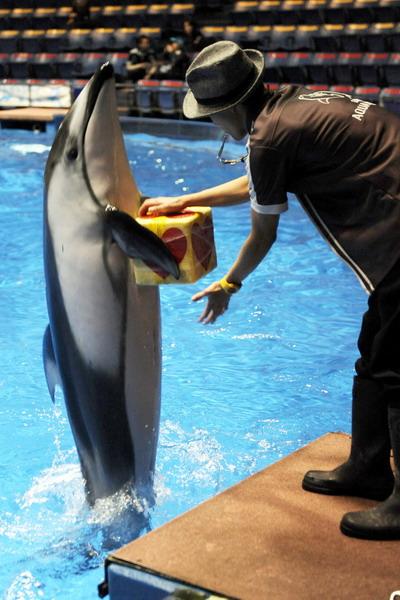 Подарок можно вручить самым необычным способом. Фото: YOSHIKAZU TSUNO/AFP/Getty Images