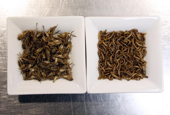ООН рекомендует в будущем питаться насекомыми. Фото: VALERY HACHE/AFP/Getty Images