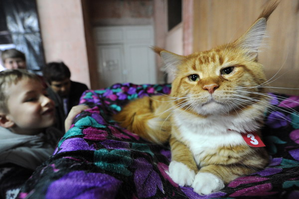 Отстаньте же, наконец, от меня! Кот я, кот, а не тигр. Фото: VYACHESLAV OSELEDKO/AFP/Getty Images