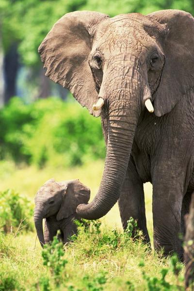 Разве слоны бывают такими маленькими? Фото: photos.com