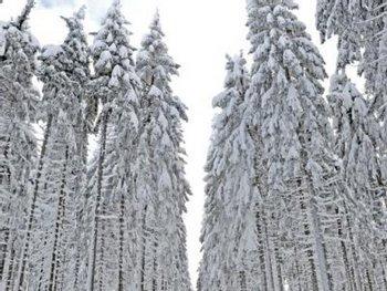 Человек выжил, проведя два месяца в занесенном снегом автомобиле Фото: abendzeitung-muenchen.de