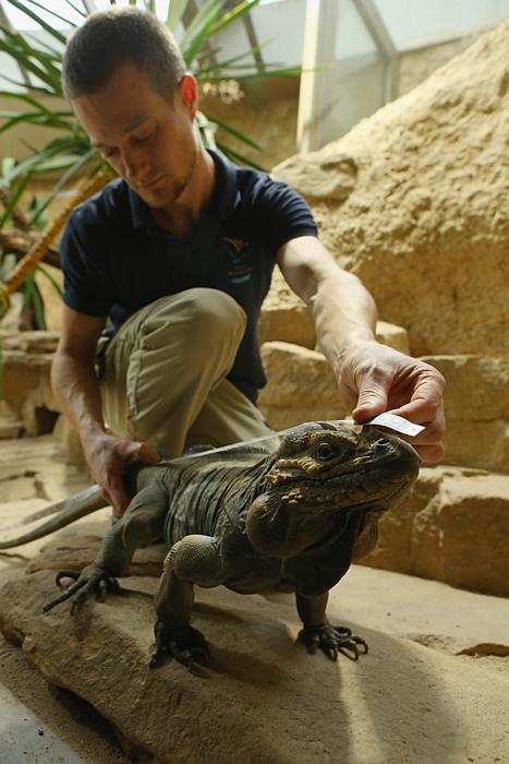 В Берлинском зоопарке и парке животных проходит ежегодный учёт животных. Фото: Sean Gallup/Getty Images