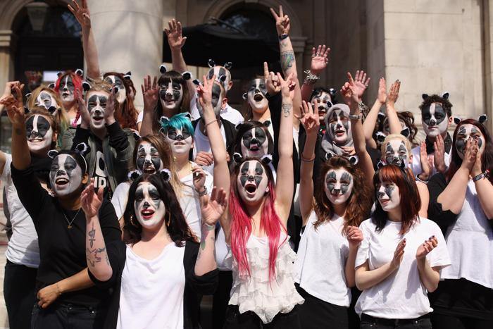 Жители Великобритании выступили в защиту барсуков . Фото: Oli Scarff/Getty Images
