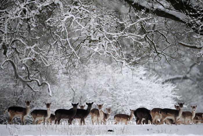 Сильные снегопады в Великобритании, 17 января 2013 года. Фото: Jamie McDonald/Getty Images