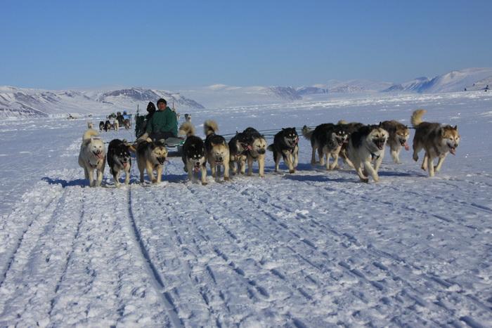 Более 150 собак будут участвовать в гонках на Камчатке. Фото: Drew Avery/flickr.com