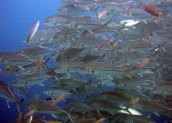 Учёные определили: рыбы в мировом океане в 10 раз больше первоначальных подсчётов. Фото: Matt Kieffer/flickr.com