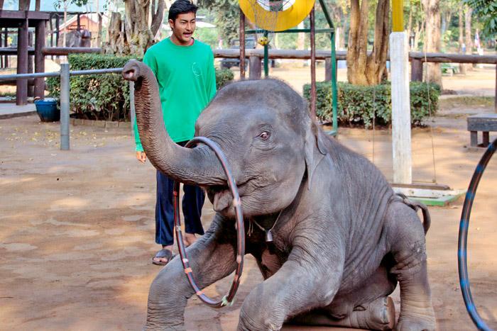 Слонёнок с обручем. Фото: Николай Карпов/Великая Эпоха (The Epoch Times)