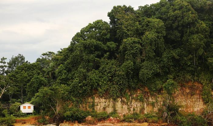 Многообразие тропических лесов сохраняют вредители. Фото: Mario Tama/Getty Images