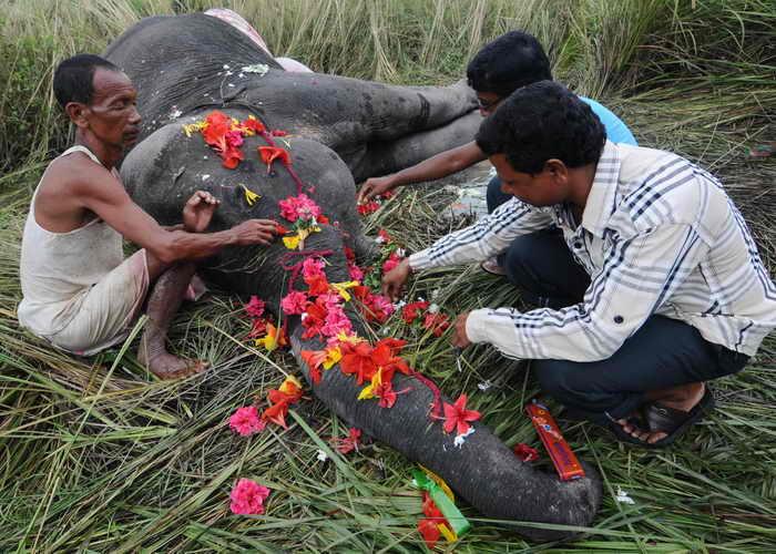 В Индии поезд, двигавшийся на большой скорости, врезался в стадо слонов. Руководители лесного хозяйства Западной Бенгалии заявили, что эта трагедия — самая ужасная из всех, которые происходили за последнее десятилетие. Фото: STRDEL/AFP/GettyImages