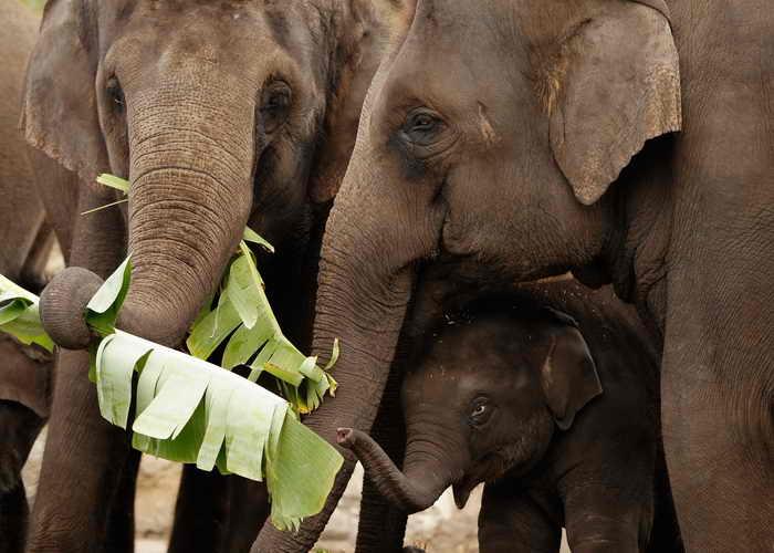 Слоны. Фото: Brendon Thorne/Getty Images