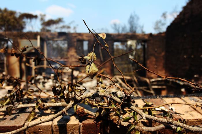 В штате Новый Южный Уэльс (Австралия) 18 октября 2013 года зарегистрирован 1 смертельный случай и более 100 сгоревших домов. Восток Австралии охватывают пожары, чему способствует жара и сухой ветер. Фото: Lisa Maree Williams / Getty Images
