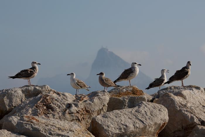 Район границы Испании и Гибралтара, 17 августа 2013 года. Фото: Pablo Blazquez Dominguez/Getty Images