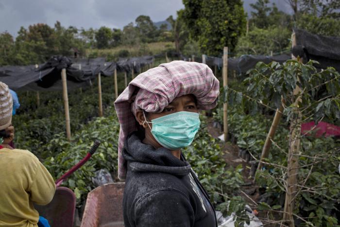 Женщина носит маску, работая на кофейной плантации 21 ноября 2013 года рядом с активизировавшимся вулканом вулкана Синабунг на севере острова Суматра (Индонезия). Фото: Ulet Ifansasti / Getty Images
