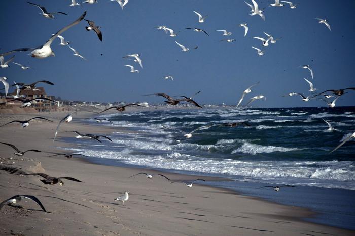 Чайки летают над пляжем Нью-Джерси 29 октября 2013 года спустя один год после урагана «Сэнди». Фото: Kena Betancur/Getty Images