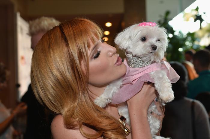 Актриса Белла Торн с собачкой на 28-й церемонии вручения ежегодной премии «Образ» (28th Annual Imagen Awards) 16 августа 2013 года в Беверли Хиллз, Калифорния (США). Фото: Alberto E. Rodriguez/Getty Images