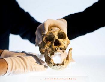 Древний череп, найденный в Грузии, стал сенсацией. Фото: VALERIE KUYPERS/AFP/Getty Images