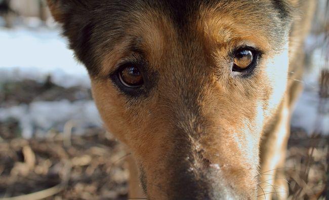 куда уходят собаки после смерти