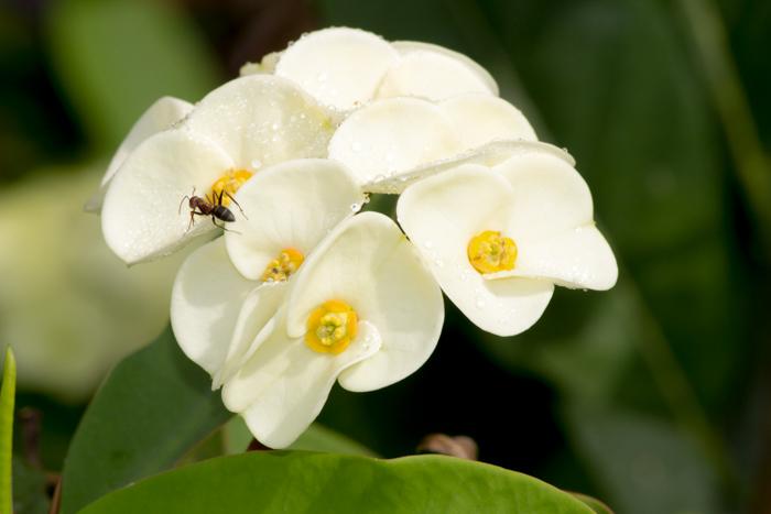 310314_flower_7
