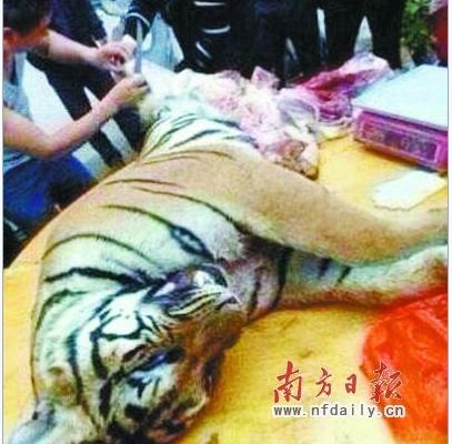 Бизнесмены в Китае дают взятки чиновникам мясом и костями тигра
