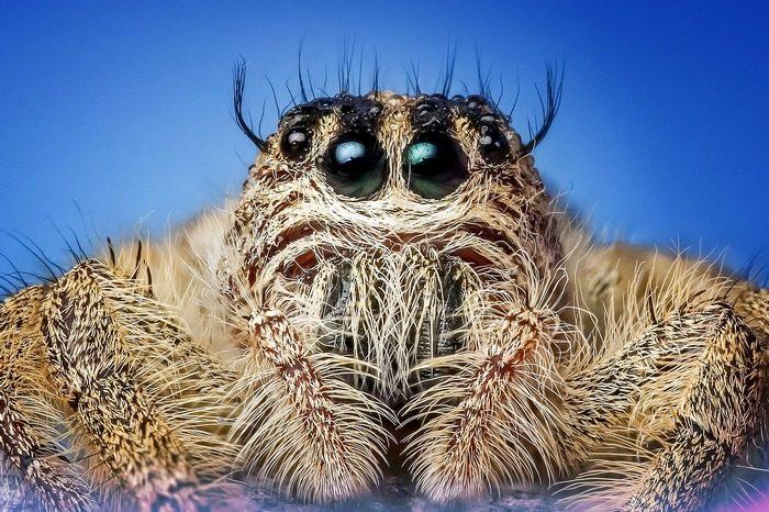 Семь самых опасных пауков в мире