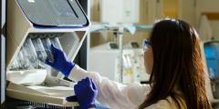 Учёными выявлен ген, блокировка которого препятствует ожирению и старению