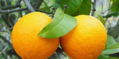 Грустная и добрая история о преступнике и апельсине