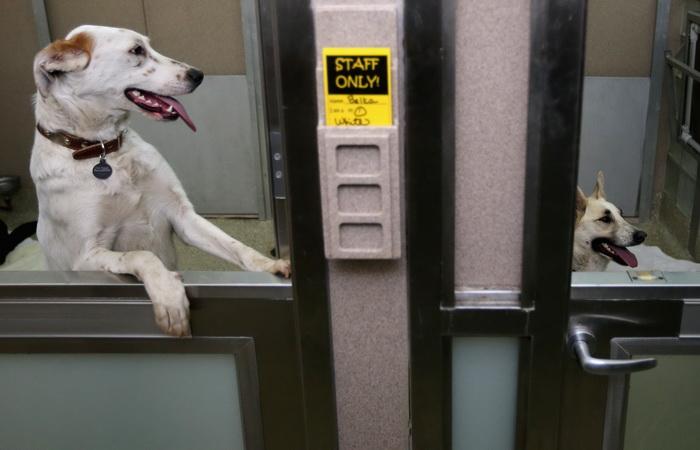 Бездомные сочинские собаки прилетели в США. Фото: Chip Somodevilla/Getty Images