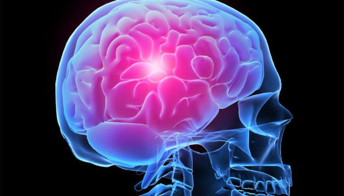 Открыт механизм восстановления нервных клеток после инсульта