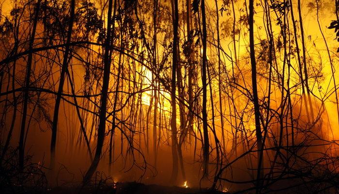 МЧС: Лесных пожаров этим летом удастся избежать