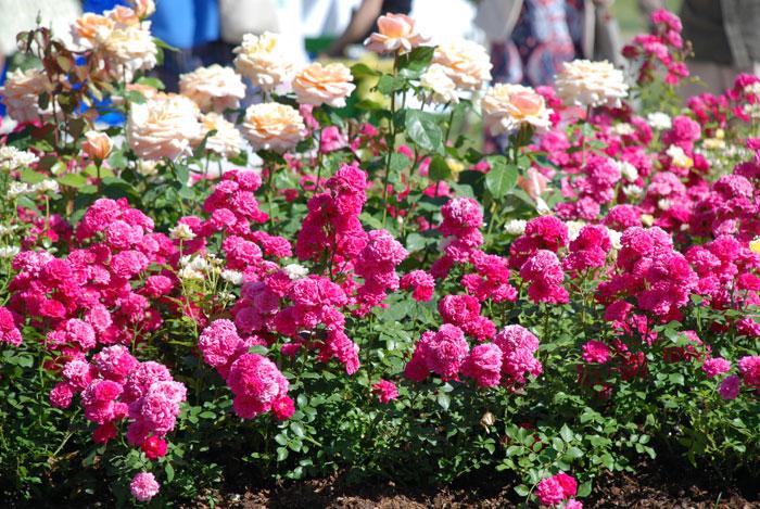 II Московский международный фестиваль садов и цветов MOSCOW FLOWER SHOW. Москва, 21 июня 2013 г.  Фото: Юлия Цигун/Великая Эпоха