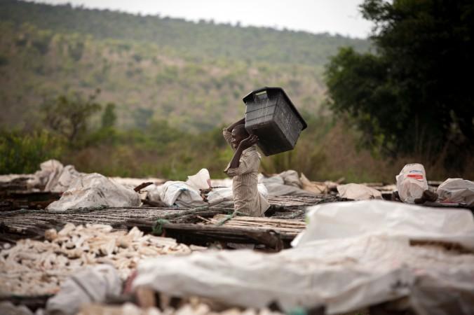 Человек раскладывает корни маниока для высушивания в деревне неподалёку от Киншасы, столицы Конго, 11 октября 2011 г. Фото: Gwenn Duborthomieu/AFP/Getty Images