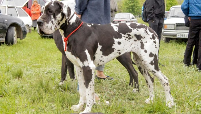В столице появится патруль, контролирующий недобросовестных собаководов