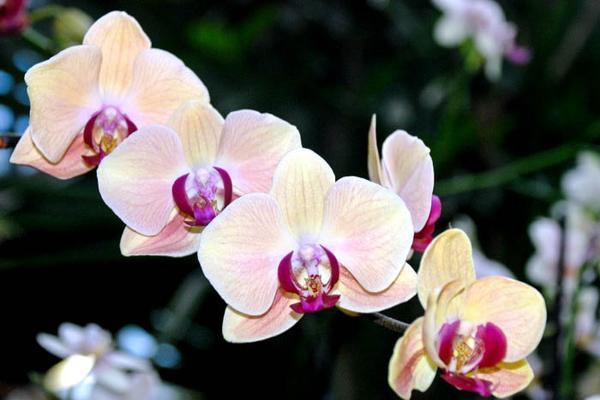 Орхидеи. Фото: Юлия Цигун/Великая Эпоха