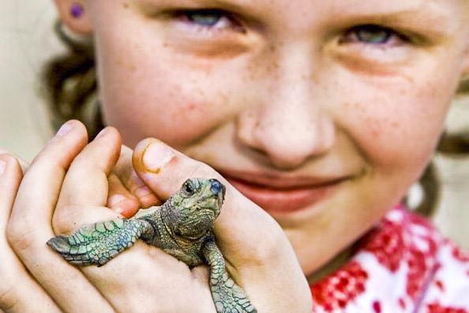 Детёныш оливковой черепахи. Фото: Paul J. Richards/AFP/Getty Images