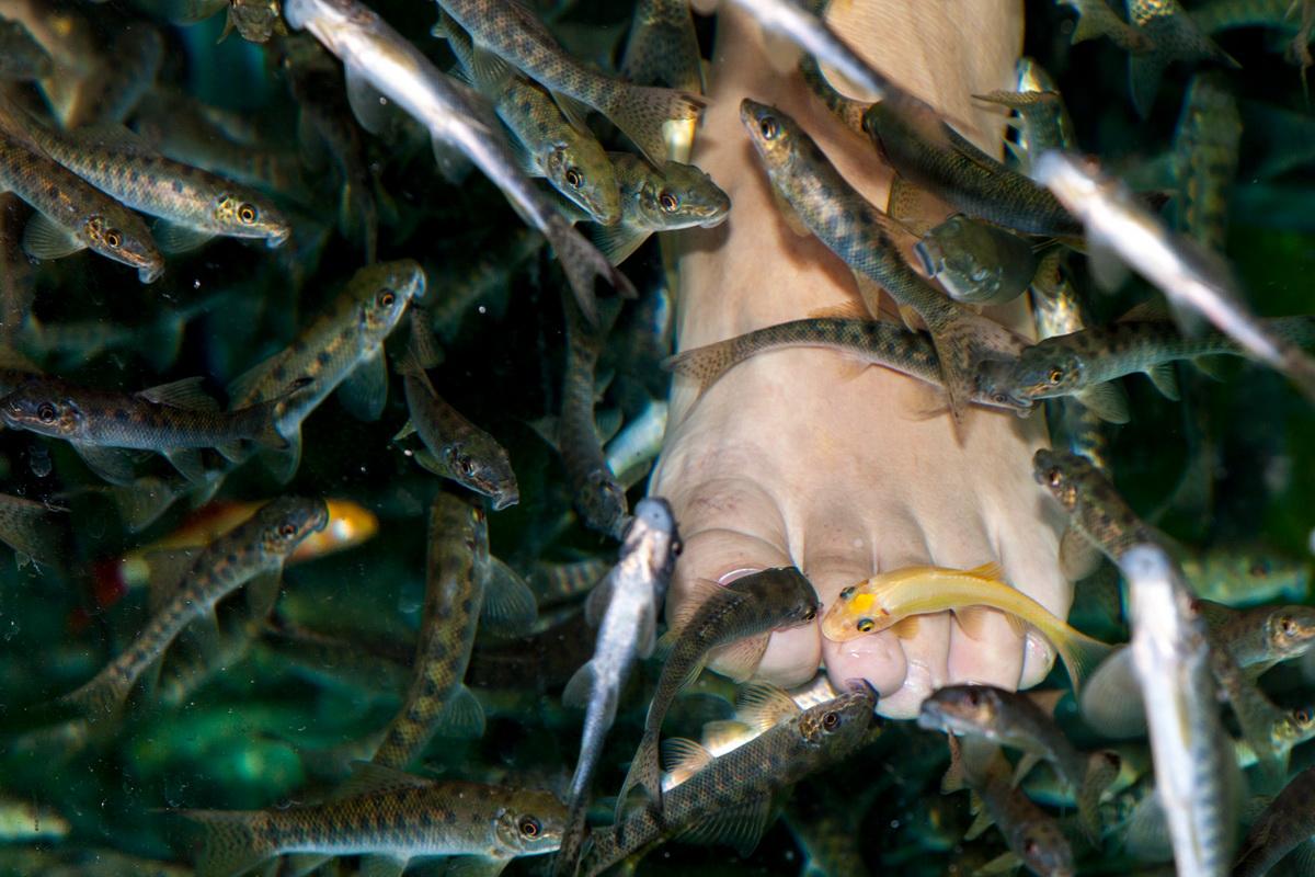 Педикюр рыбками. Фото: Великая Эпоха