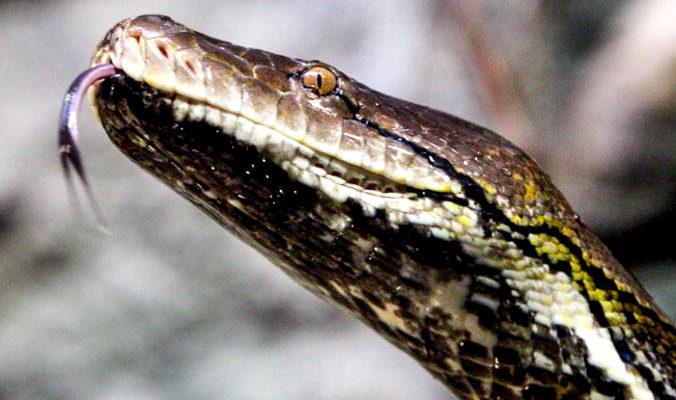 Змеи стали причиной каникул в одной из школ Киргизии