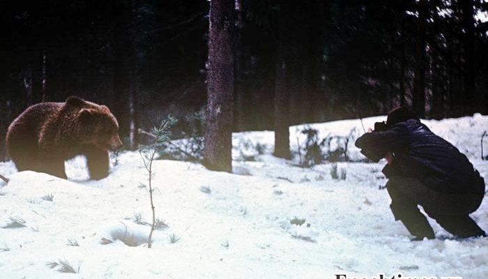 В Карелии медведь устроился зимовать на диване в проходной комбината