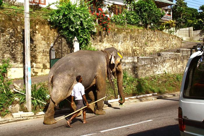 Шри-Ланка. Фото: Великая Эпоха