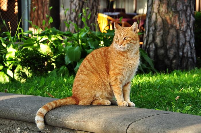 Рыжий кот. Фото: Екатерина Кравцова/Великая Эпоха