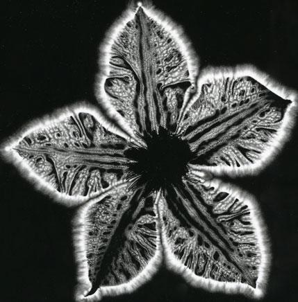 Кирлианова фотография ауры растения