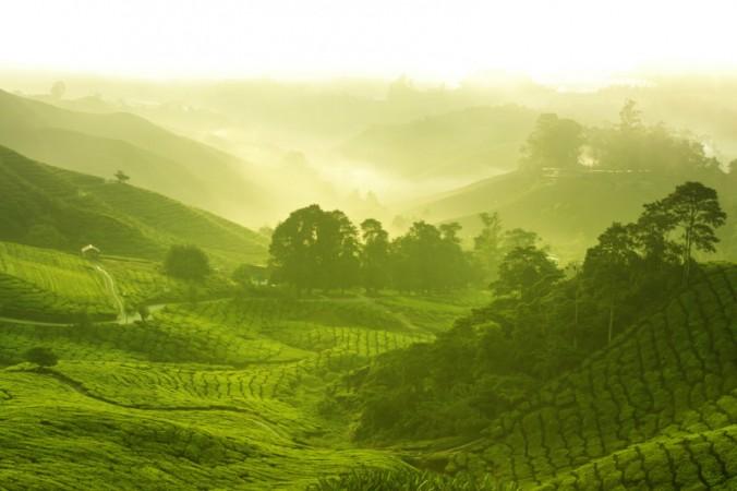 Фото горной местности в Малайзии. Отношение народа сенои к снам на протяжении десятилетий привлекает интерес исследователей. Фото: Shutterstock*