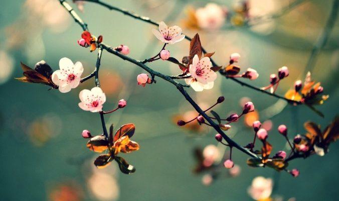 Весна — время заняться печенью