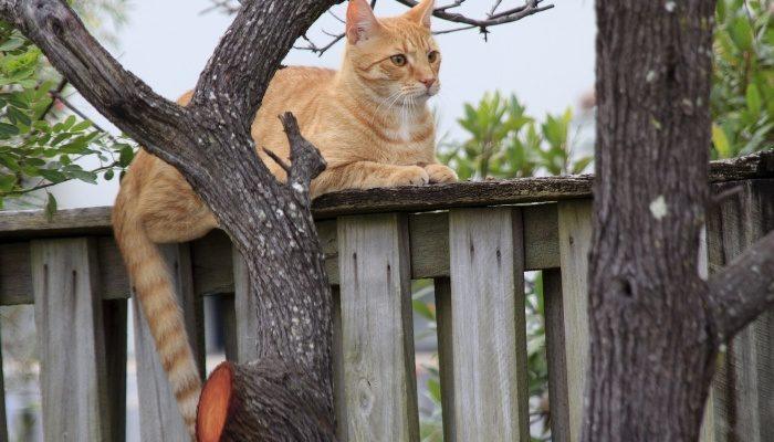 Забор из дерева «Шахматный»