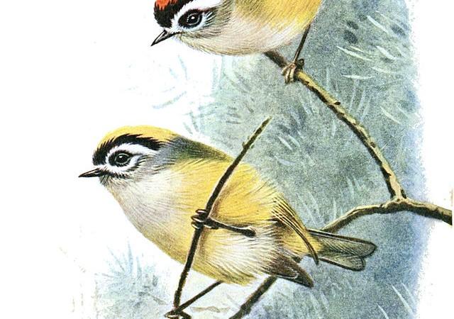 птицы, Окружающая среда, Индия, природа