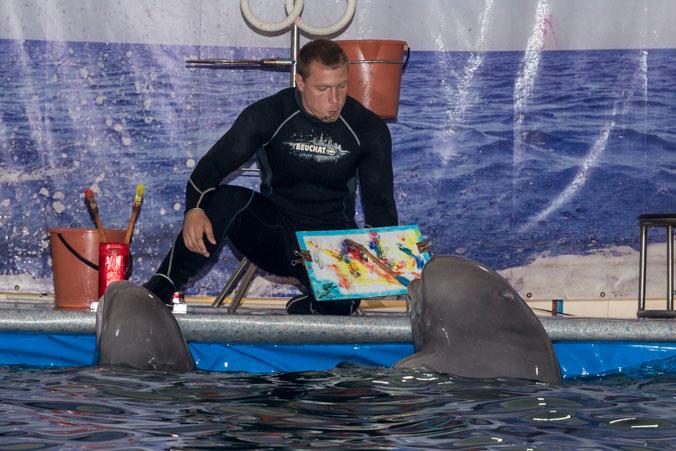 Дельфины рисуют картину по очереди кисточками с красками разного цвета. Шоу дельфинов и морских котиков в Рязани. Фото: Сергей Лучезарный/Великая Эпоха